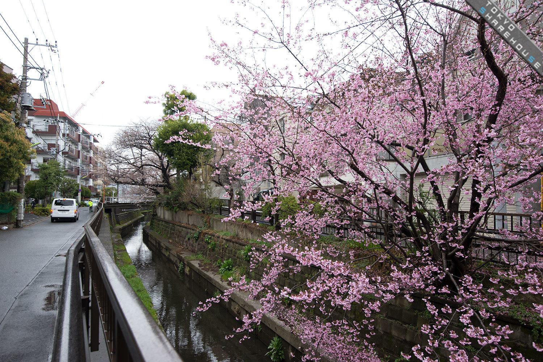 futakotamagawa.48
